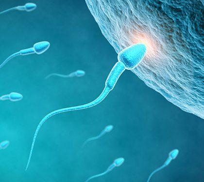 Jak zvýšit svou plodnost?