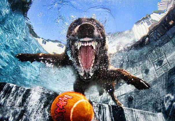 pes pod vodou