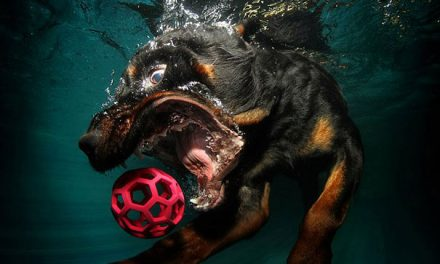 Psi pod vodou