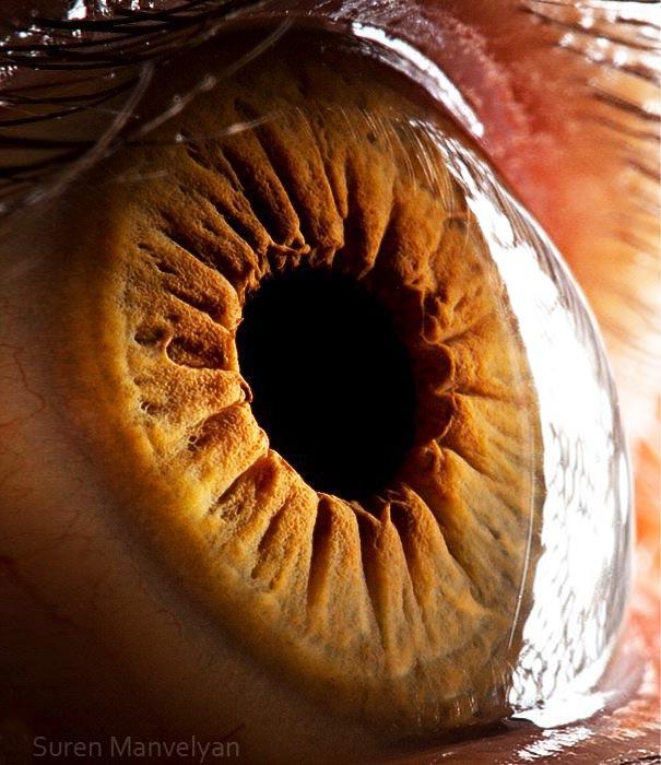 Oči pod mikroskopem.