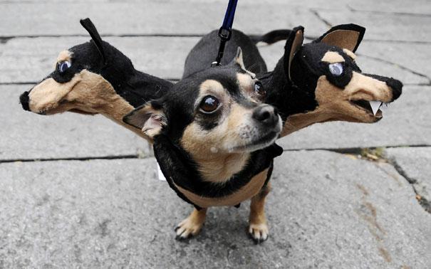 Halloweenské kostýmy pro mazlíčky