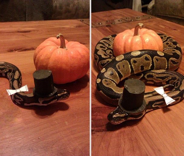 halloweenske-kostymy-pro-mazlicky-19