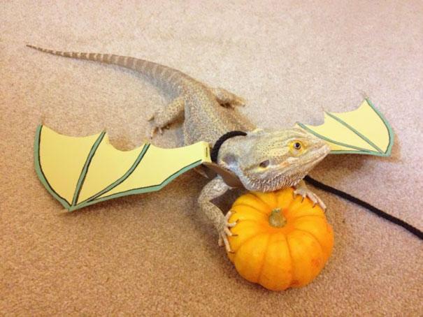 halloweenske-kostymy-pro-mazlicky-22