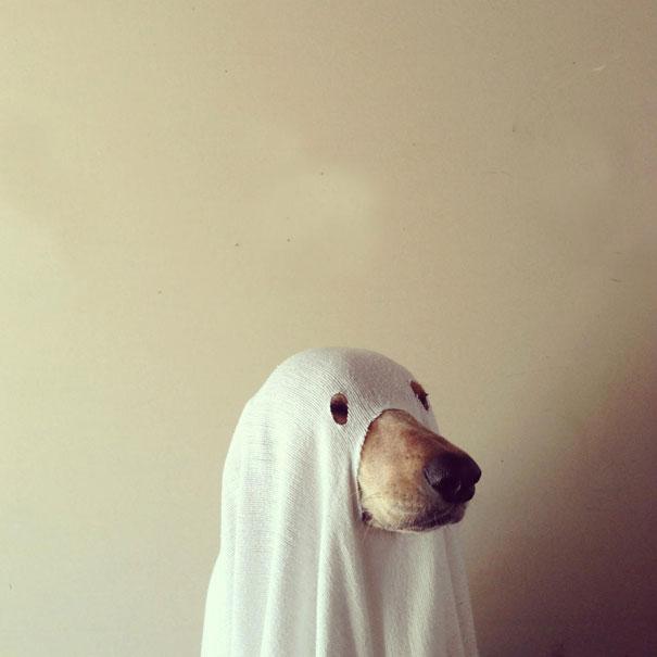 halloweenske-kostymy-pro-mazlicky-23