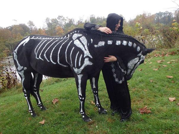 halloweenske-kostymy-pro-mazlicky-3