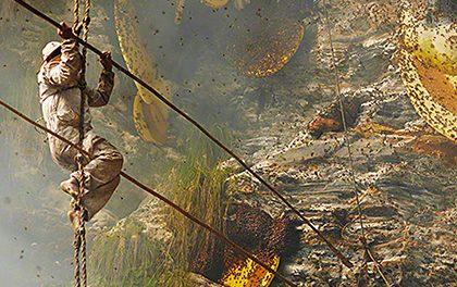 Sběrači medu z Nepálu