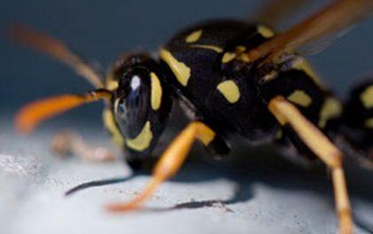 Nejobávanější kousnutí! Podívejte se, co vám může hmyz způsobit!