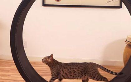 Kolotoč pro křečka ve velkém a pro kočku! Podívejte se na skvělou kočičí hračku!