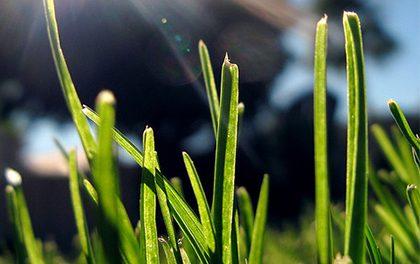 Jak mít posekaný trávník bez práce?