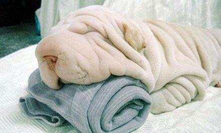 Psi, kteří vypadají jako něco jiného!