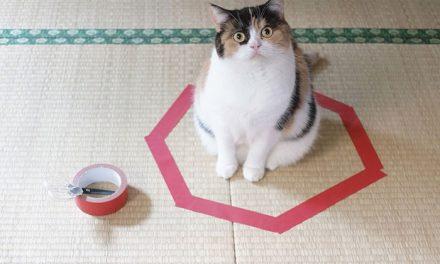 Jak chytit kočku ve 3 krocích?