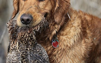 Lovecký pes – Víte, jaké hračky a výcvik potřebuje?