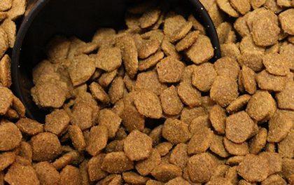 Nevíte, jak vybrat granule pro psy? Poradíme, čím se řídit!