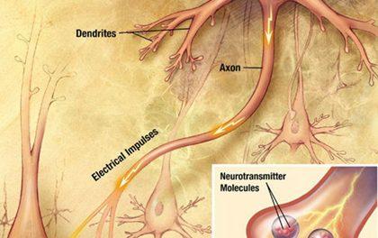 Amyotrofická laterální skleróza – ALS – co to je?