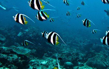 Jak začít s potápěním?