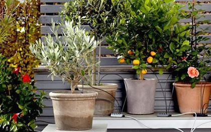 Jedete na dovolenou a máte strach, že trávník i zahrada v parných dnech seschnou? Zavlažovací systém se o vše postará!