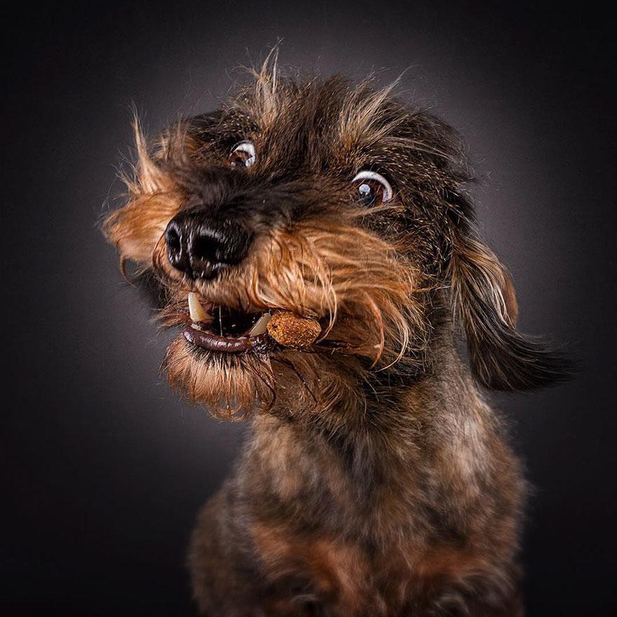 dogs-catching-treats-fotos-frei-schnauze-christian-vieler-22-57e8d0b3e6139__880
