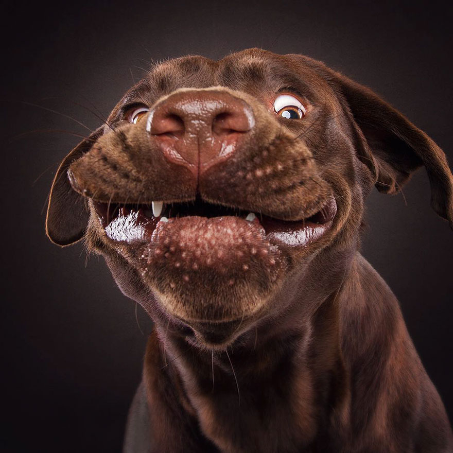dogs-catching-treats-fotos-frei-schnauze-christian-vieler-53-57e8d0f5ae982__880