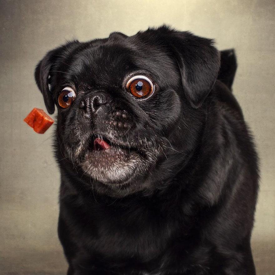 dogs-catching-treats-fotos-frei-schnauze-christian-vieler-60-57e8d102c613f__880