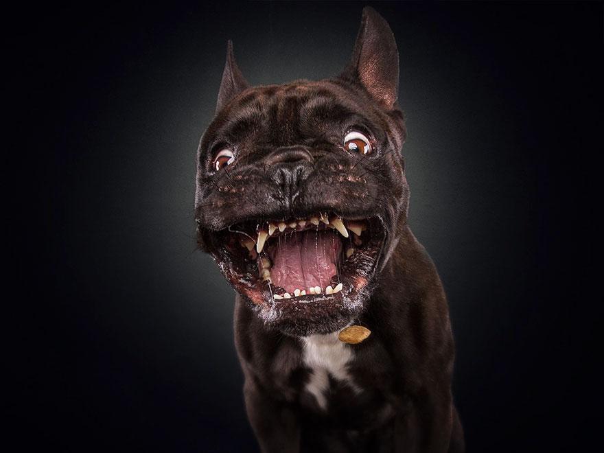 dogs-catching-treats-fotos-frei-schnauze-christian-vieler-72-57e8dab8203f3__880