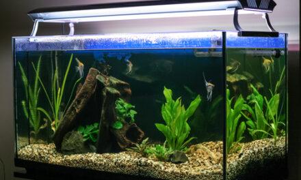 Jak osvětlit akvárium?